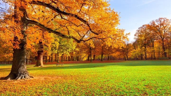 park-autumn-scenery-2560x1440